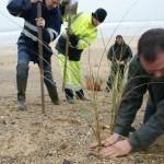 Appel aux bénévoles : 20 000 oyats à planter sur la dune !